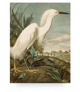 Snowy Heron, L