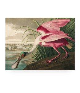 Roseate Spoonbill, L