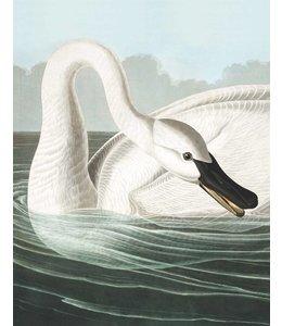 Tapetenpaneel Trumpeter Swan