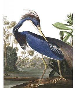 Tapetenpaneel Louisiana Heron