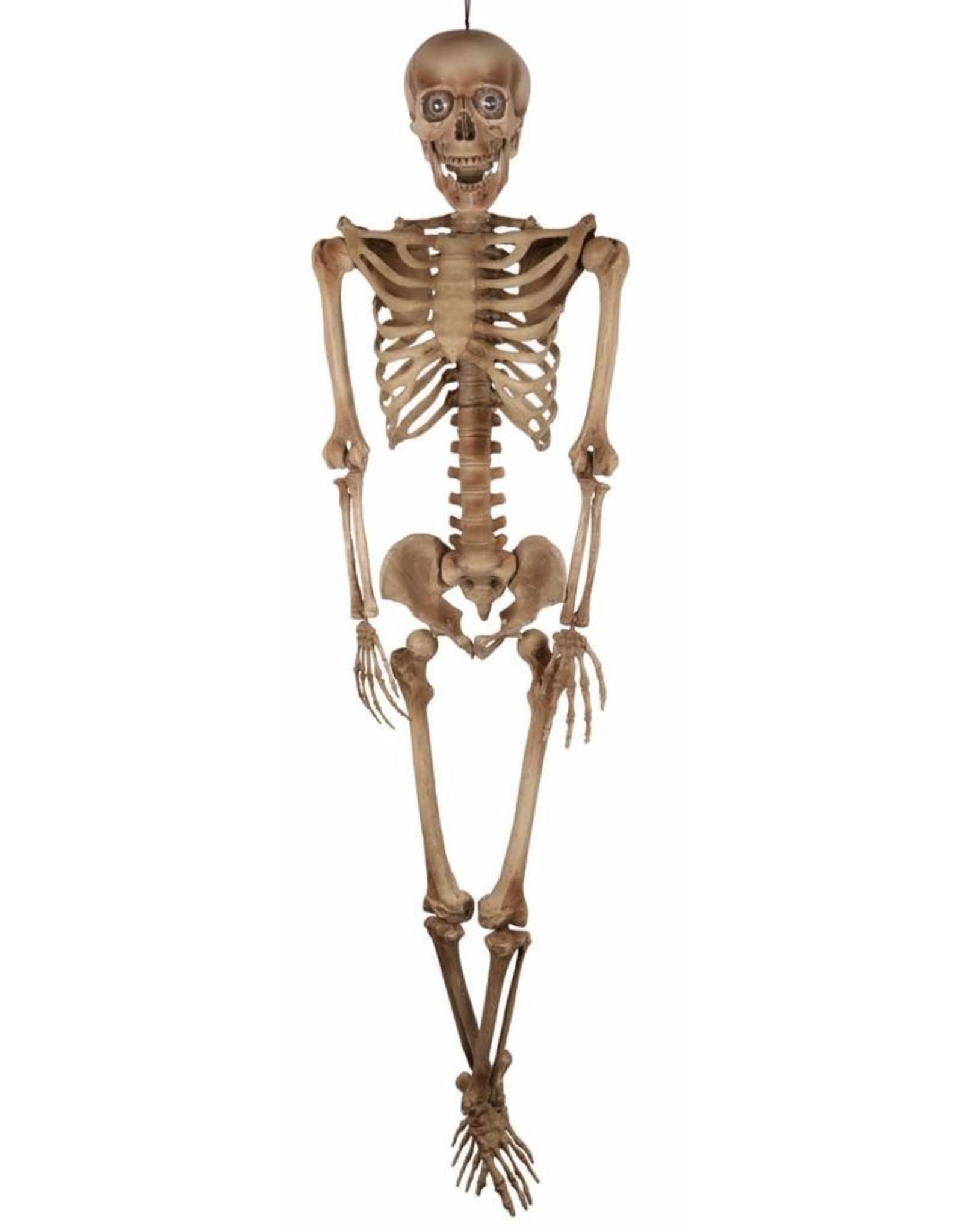 FARAM skelet 160cm.