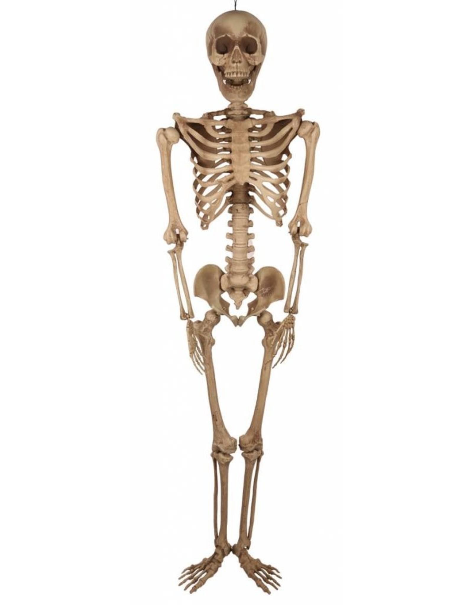 FARAM skelet 200cm.