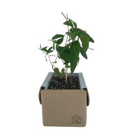 LIL PLOT / Kit de culture d'eucalyptus