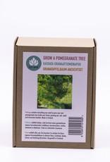 Granatapfelbaum Anzuchtset