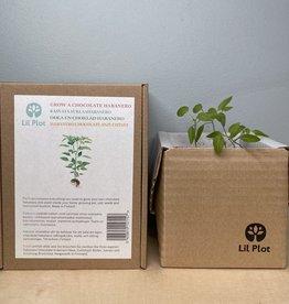 LIL PLOT / Chocolate Habanero Tree Growing Kit