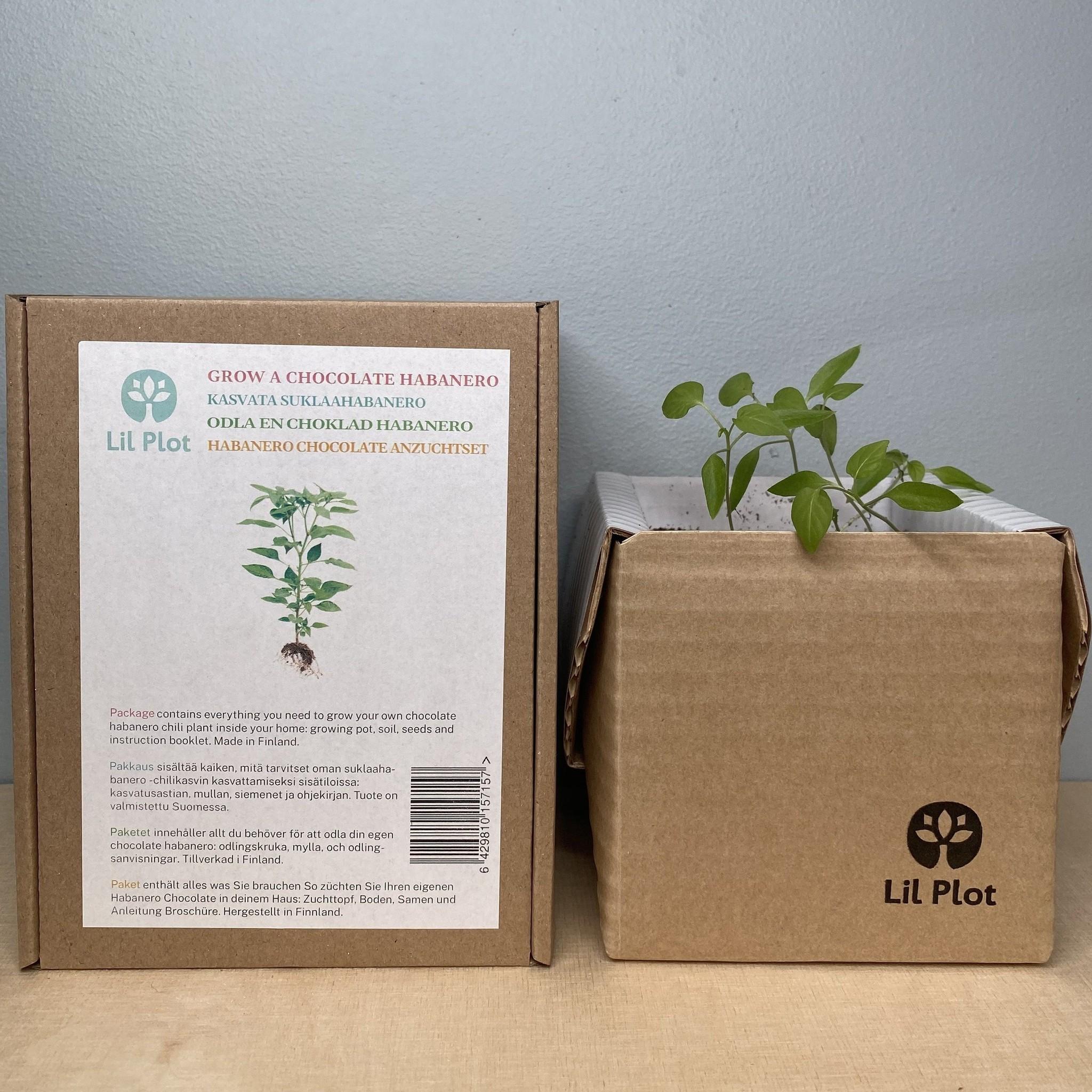 Chocolate Habanero Tree Growing Kit
