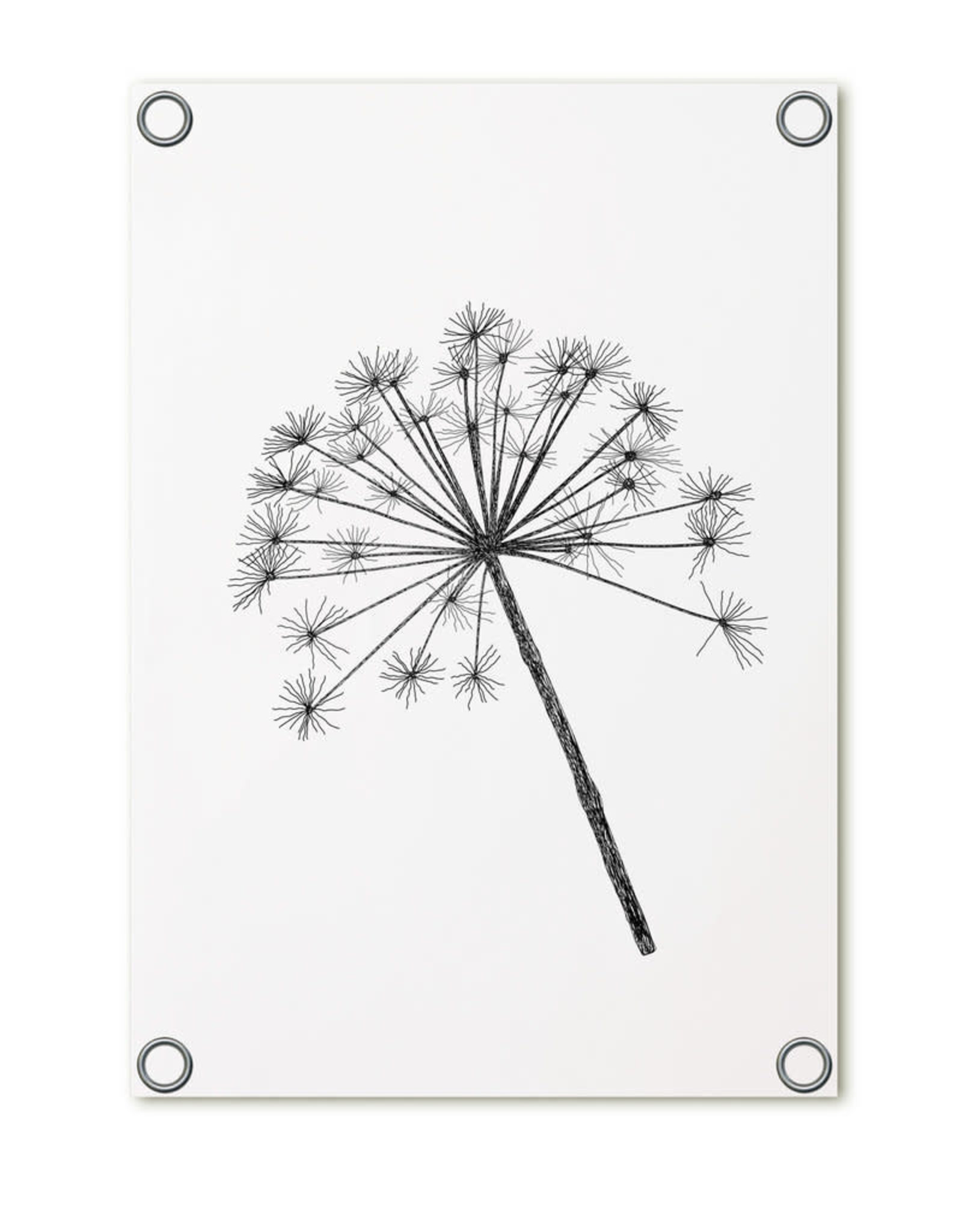 Tuinposter blaasbloem