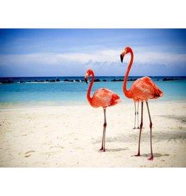 Diamond Painting flamingo 40x50cm