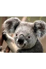 Diamond Painting koala 40x50cm