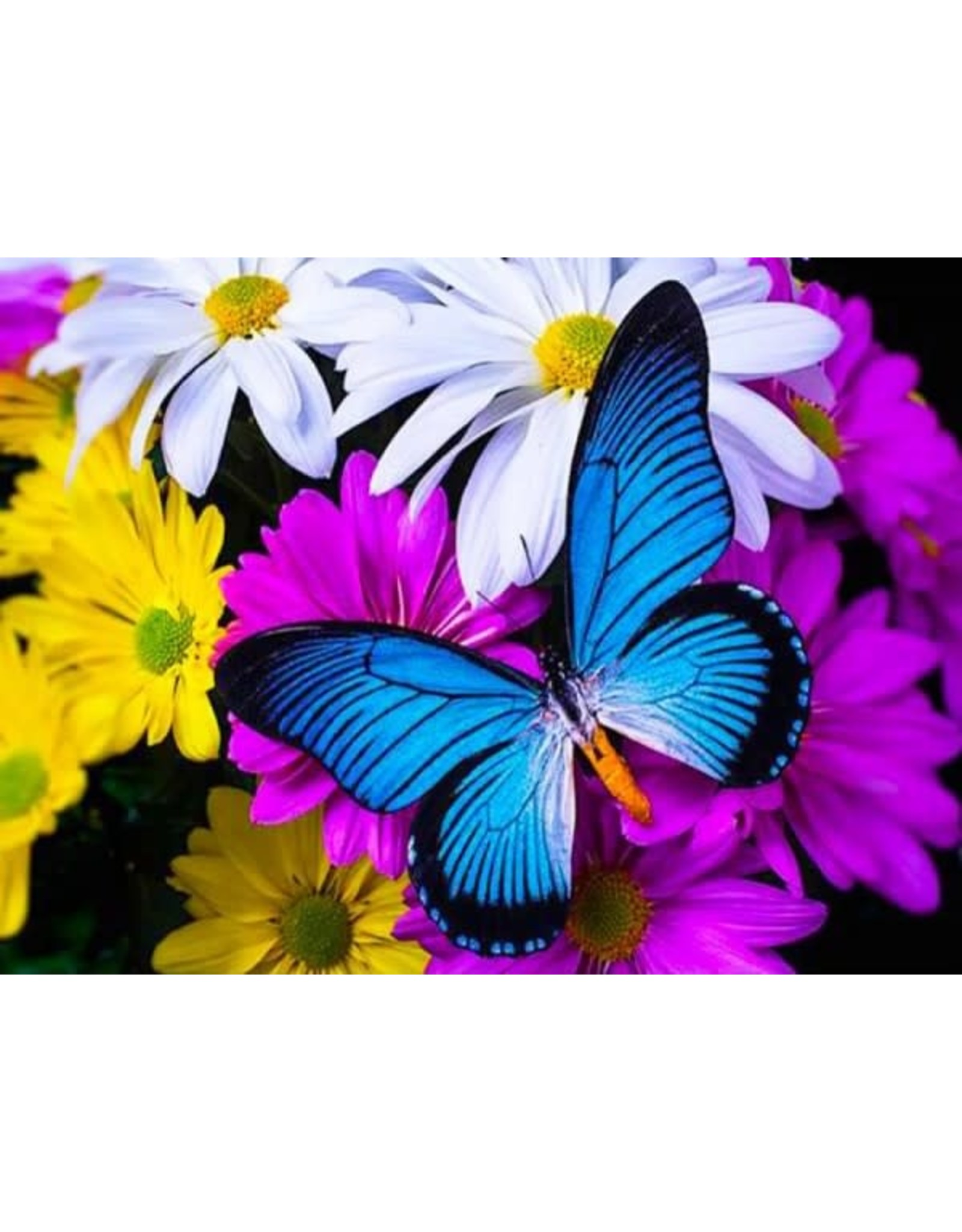 Diamond Painting vlinder blauw 30x40cm