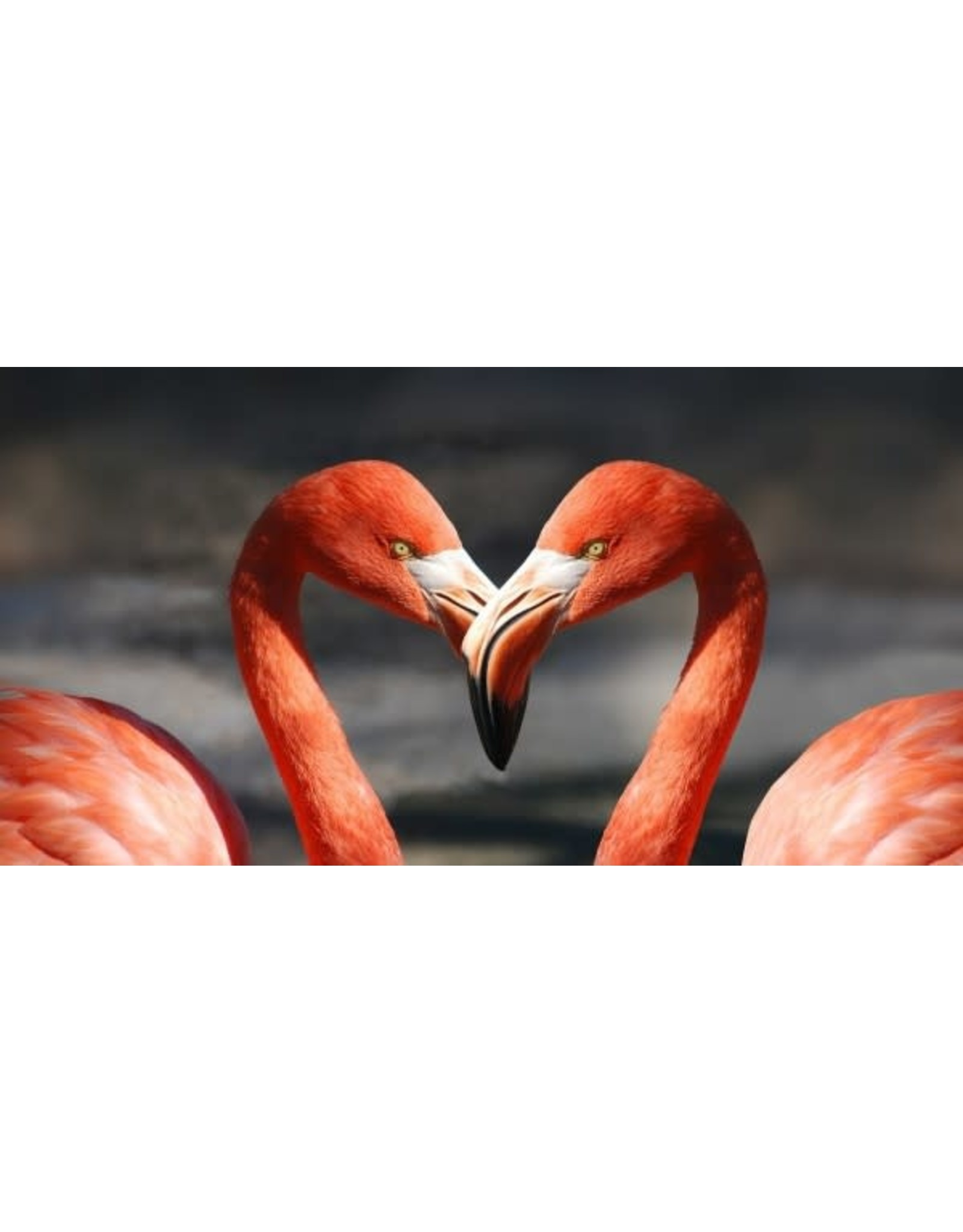 Diamond Painting flamingo XL 40x80cm