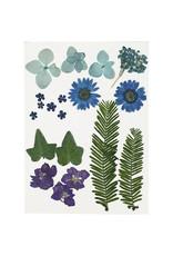 Gedroogde bloemen blauw