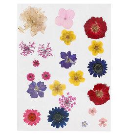 Gedroogde bloemen multi