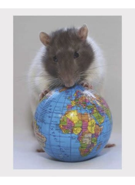 3D postcard rat met werledbol