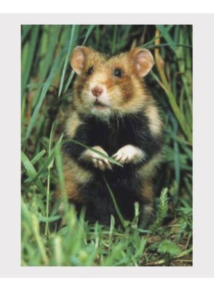 3D postcard hamster