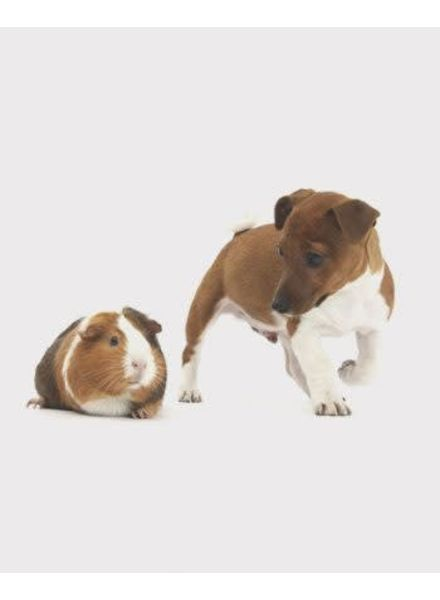 3D postcard cavia en hond