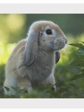 Magneet, hangoor konijn