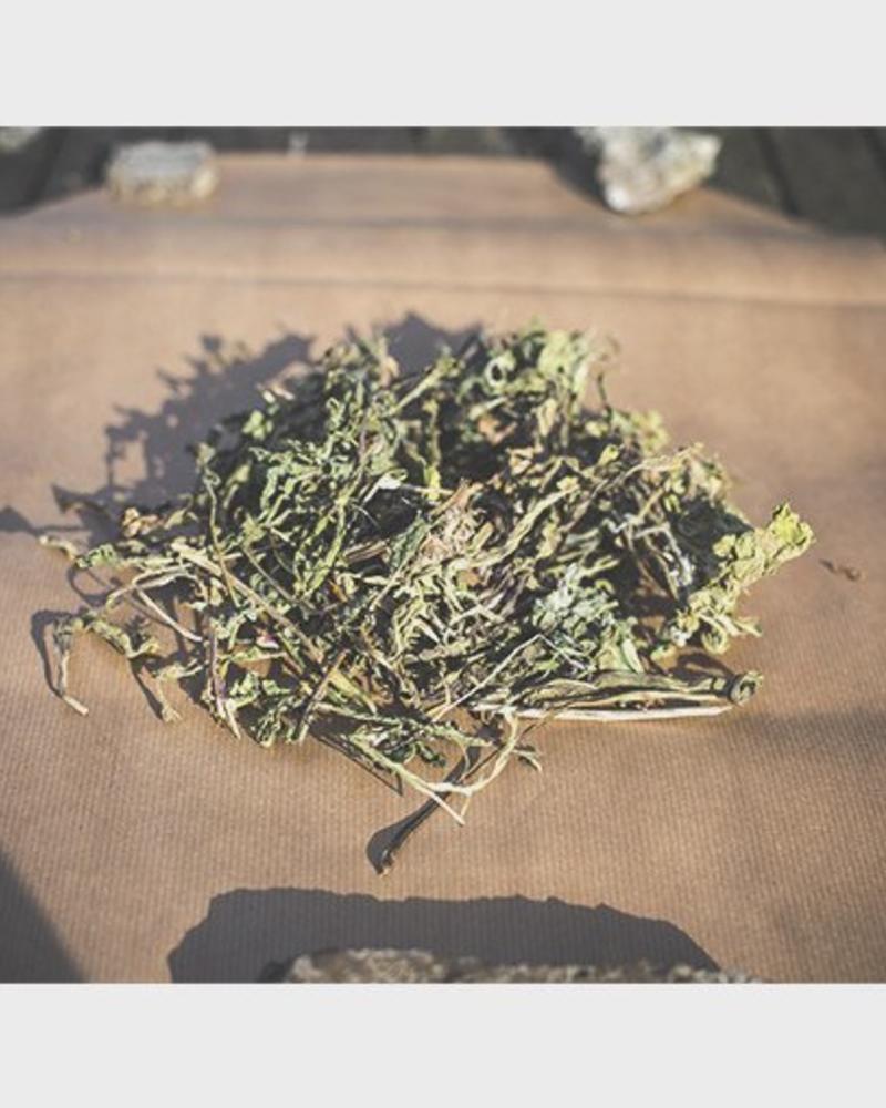Dandelion leafs 2nd choice - Taraxacum officinale