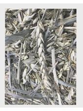 Groene tarwe: gr. gewicht