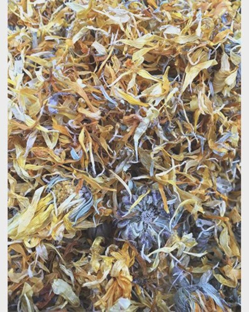 Souci - Calendula officinalis
