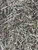 Selderij steeltjes - Apium graveolens