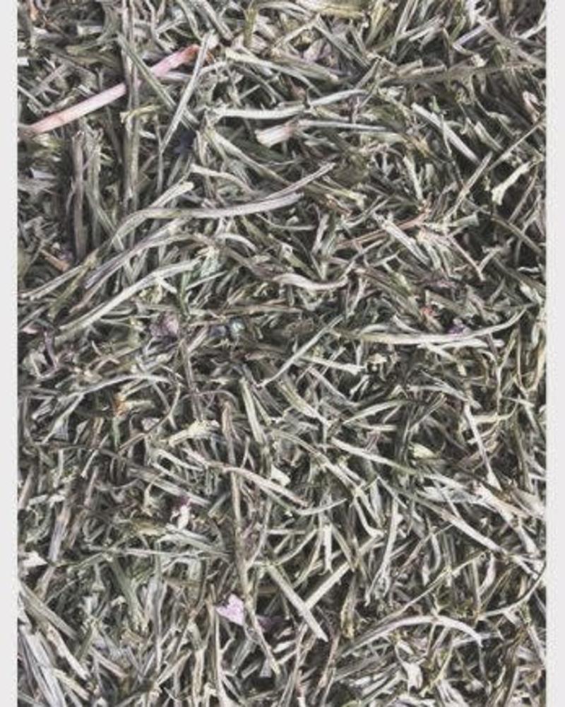 Tiges de céleri - Apium graveolens