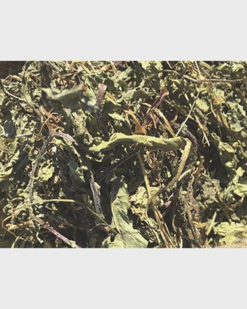 Nettle leaves - Urtica folium