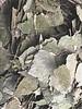 Feuilles de bouleau - Betula folium