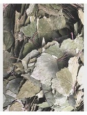 Feuilles de bouleau 1.5 kg - 15 kg