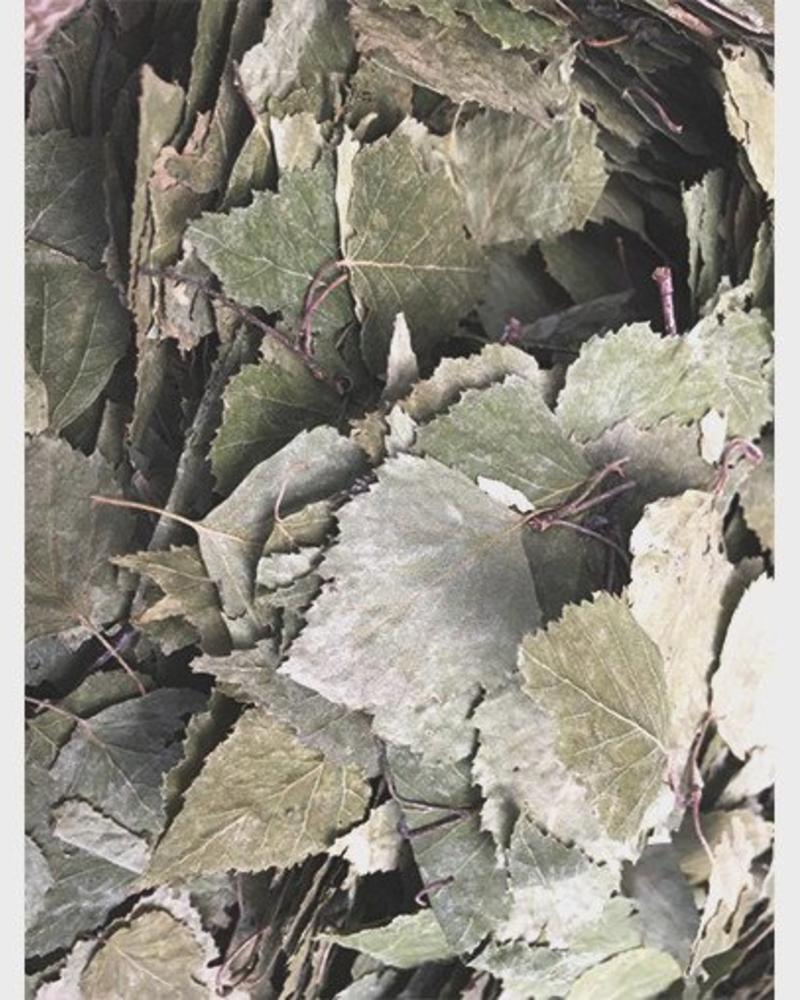 Birch leaves - Betula folium