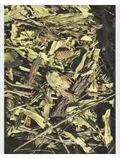 Feuilles Plantain 100 gr. - 1 kg