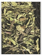 Feuilles Plantain 1.5 kg - 20 kg
