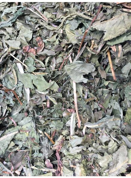 Dandelion leaves first choice 1.5 - 15 kg