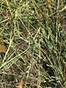 Happy rabbits Duits Kruidenhooi Puur natuur, Snede juli 2020