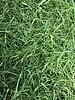 Kervelsteeltjes - Anthriscus cerefolium