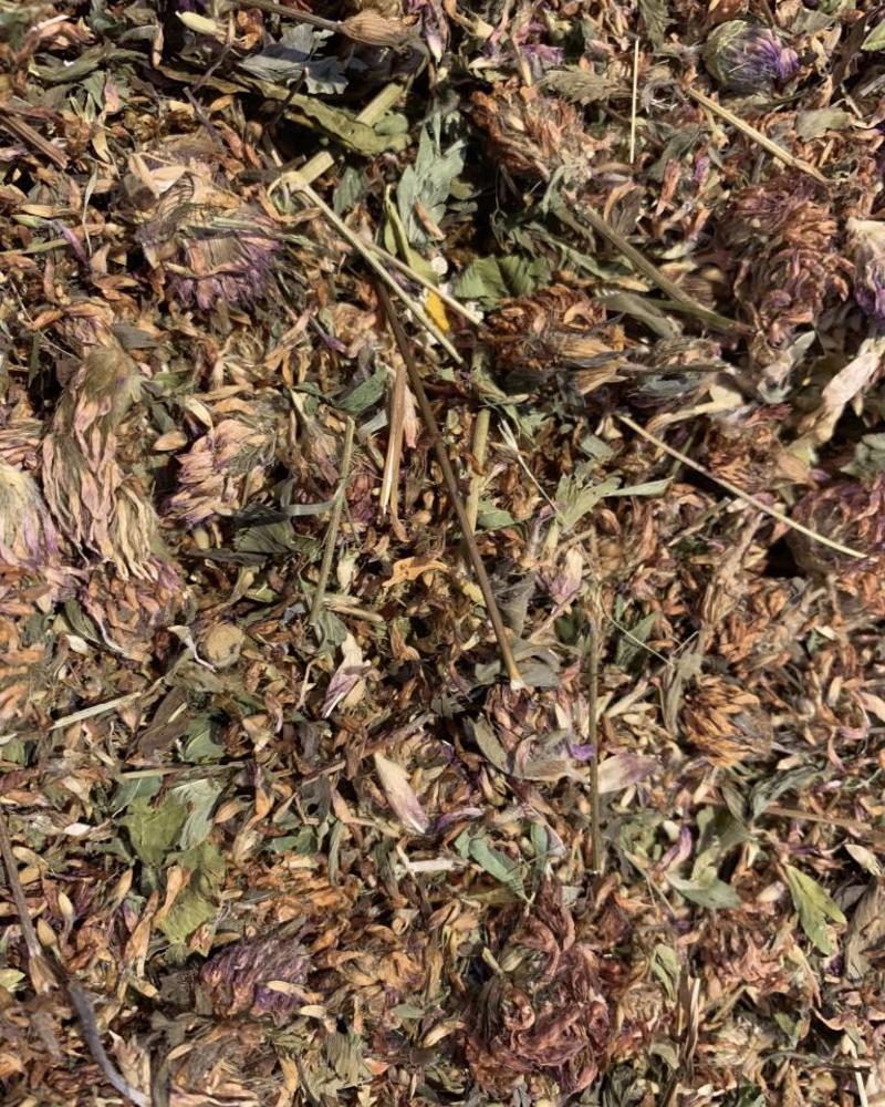 Rode klaver bloemen - Trifolium pratense