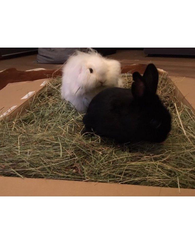 Happy rabbits - Hooi assortiment