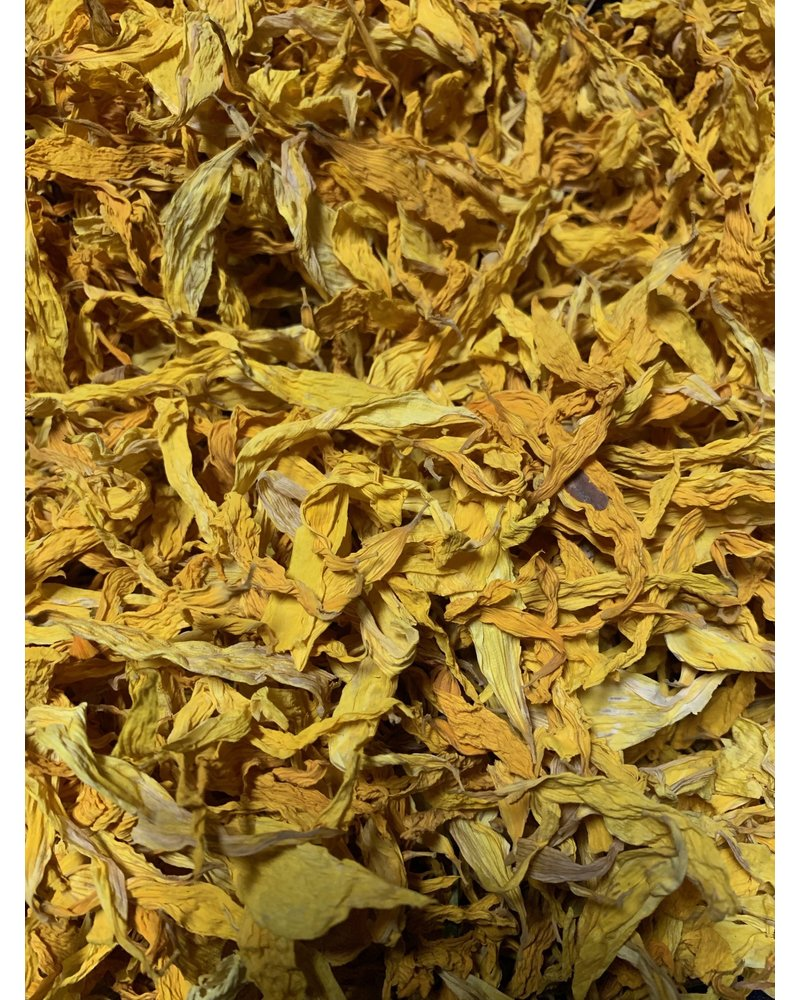 Sunflower Petals - Helianthus annuus