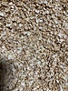 Selderijvlokken - Apium graveolens