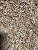 Flocons de céleri - Apium graveolens