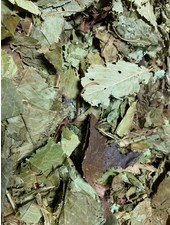 Cherry leaf 100gr - 1kg