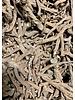 Dandelion roots - Taraxacum officinale radix