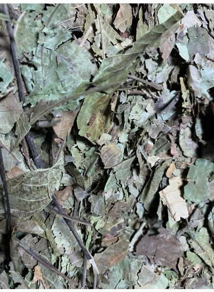 Walnut leaves 100 gr - 1kg
