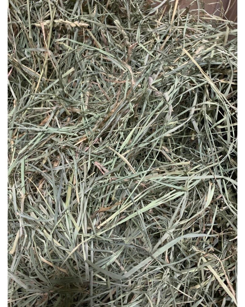 Happy rabbits, Orchard Grass