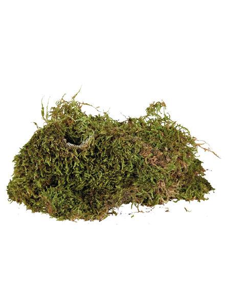 Terrarium-mos, 200 gr