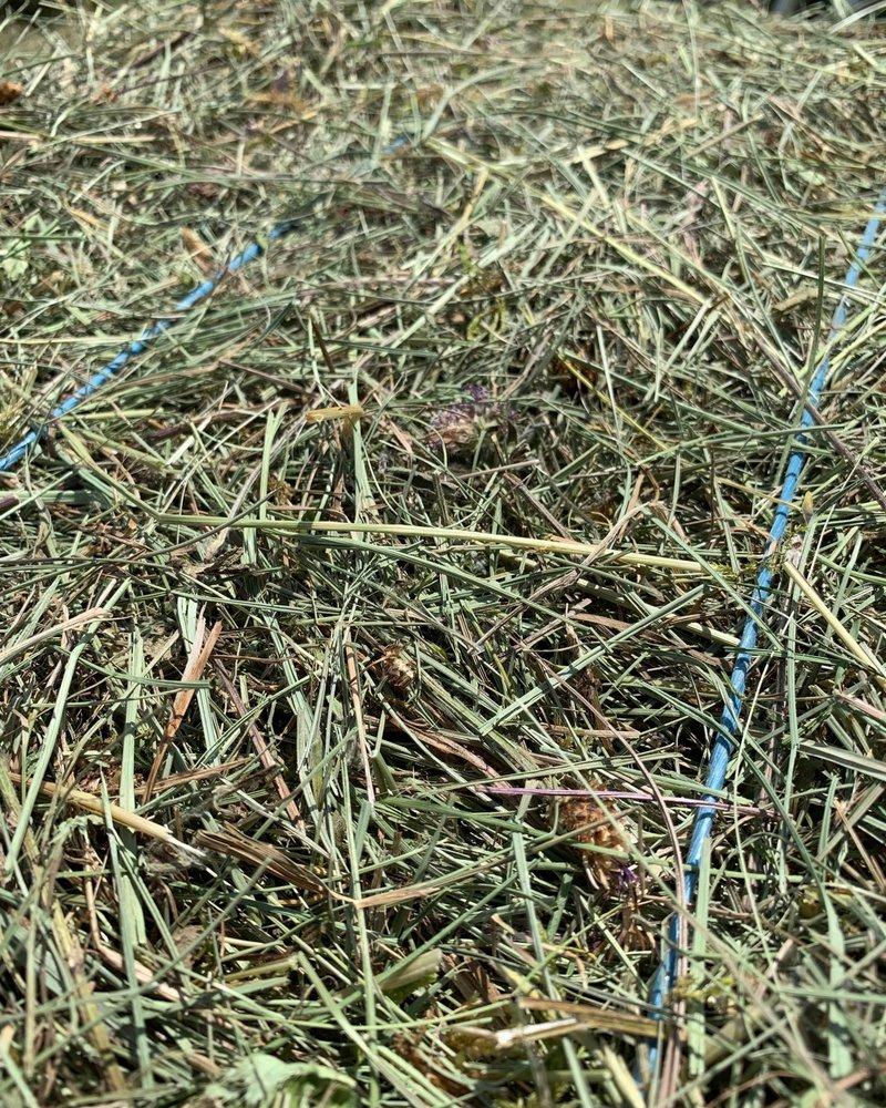 Happy Rabbits PREMIUM Foin allemand aux herbes