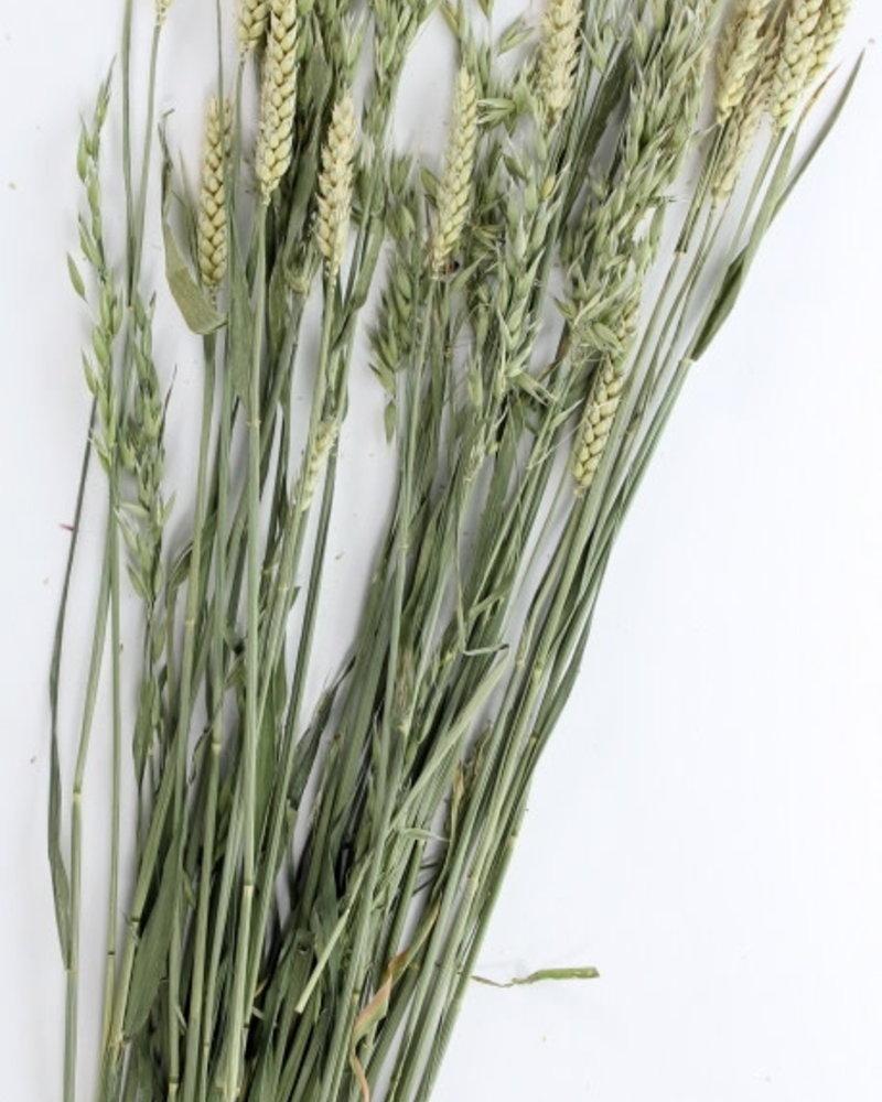 Haverland grassen