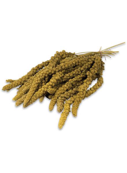 Spray Millet yellow