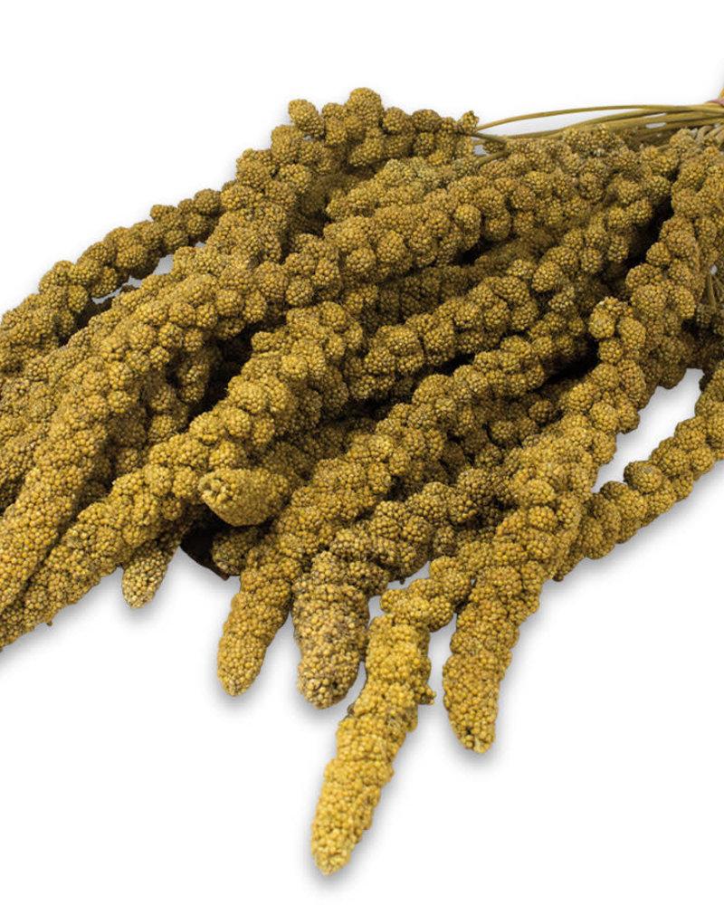 JR FARM Jr-Farm Spray millet yellow 75 gr.