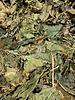 Moerbeibladeren